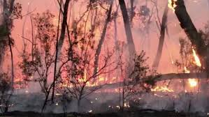 Photo of ما السبب في حرائق أستراليا !!
